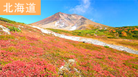 北海道周遊旅行特集第3弾!